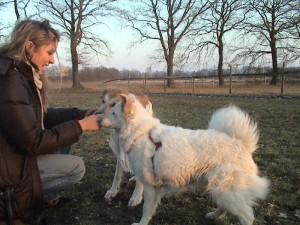 praktikum-tierpsychologie-animalvision